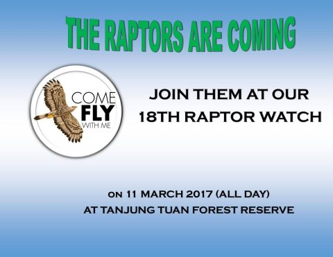 Raptor Watch 2017