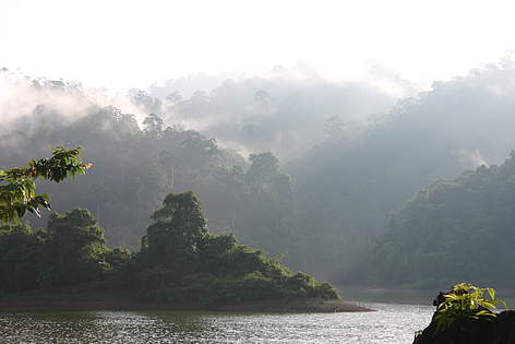 View of the Greater Ulu Muda forest