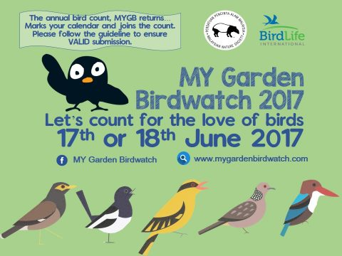 The Eighth MY Garden Birdwatch 2017