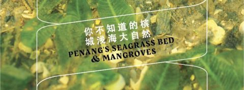 Penang's Seagrass Bed & Mangroves