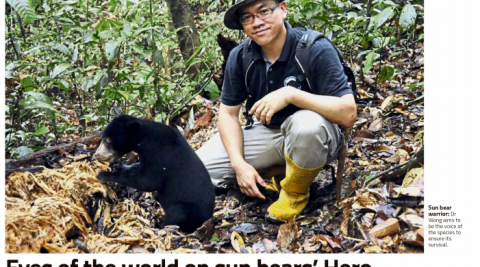 Eyes of the world on sun bears' Hero – Newspaper cutting