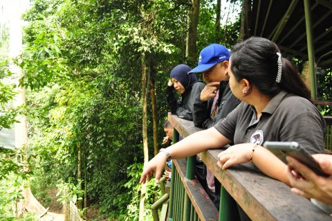 Observing sun bears in the forest enclosure from the observation platform