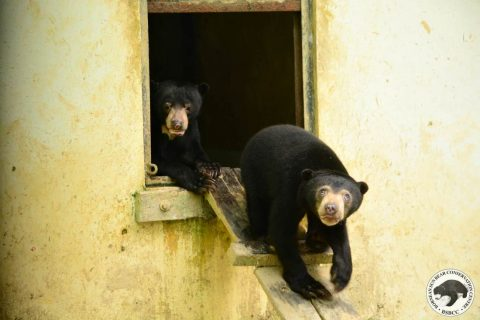 Bear Story – A Castle of Wood. A Playground for Bears