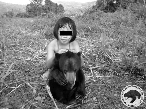 A villager reported that Mary was found in a palm oil plantation while hunting for bearded pigs. Mary was kept as a house pet and ended up spending her life confined in a tiny cage.