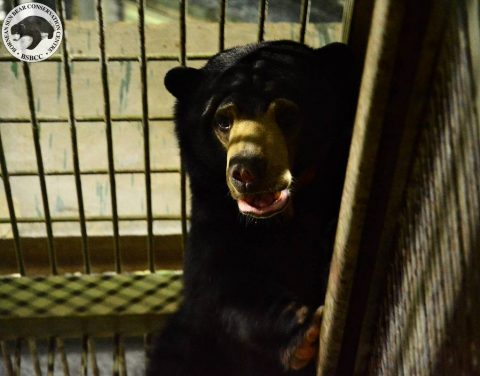 Bear Story – Take Your Time to Know About Soo Bear