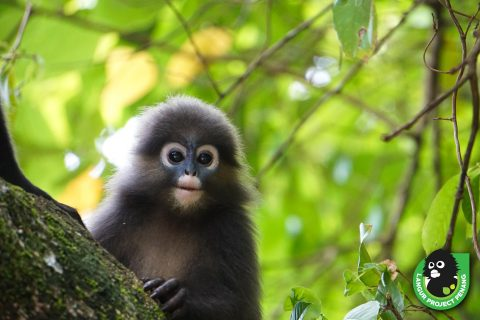Langur Project Penang: Our Dirty Hands