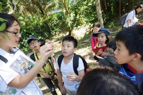 Langur Project Penang