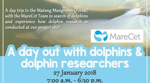 A Day Out With Dolphins & Dolphin Researchers