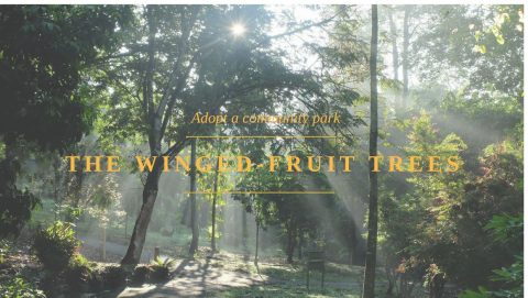 Adopt a Community Park – A Winged-Fruit Trees