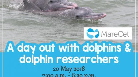 A Day Out with Dolphins & Dolphin Researchers at MareCet