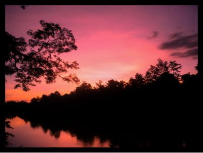 TREC provides an opportunity to experience Borneo rainforests at their best at dawn or dusk