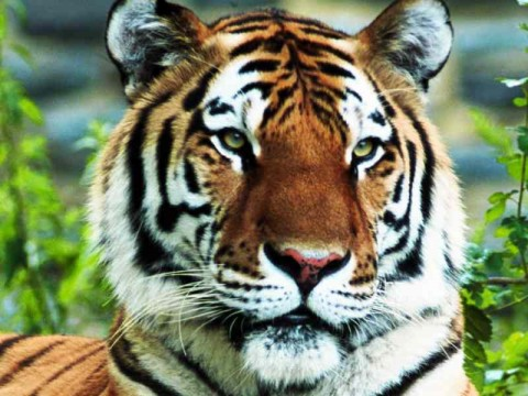 National Tiger Conservation Action Plan (NTCAP)