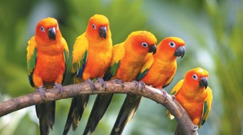 Trip: Birdwatching at Bukit Rengit, Lanchang, Pahang