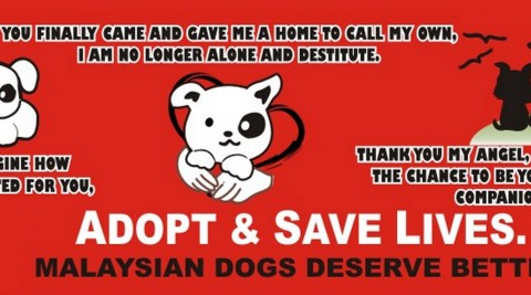 Appeal for donations – Help us save the dogs!