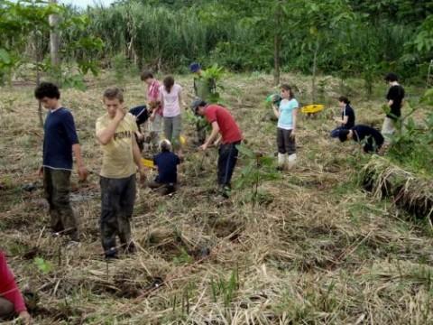 Forest and Habitat Restoration