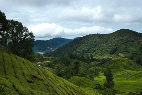 Trip: Cameron Highlands 3D2N leisure cum photography