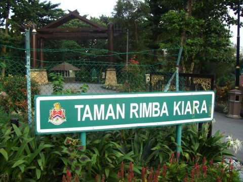 Trip: Bukit Kiara Walk (Flora Group)