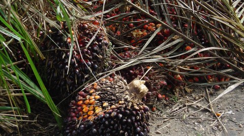 State of the Art of Palm Oil Mill Effluent Treatment Technologies – 2 Days Training