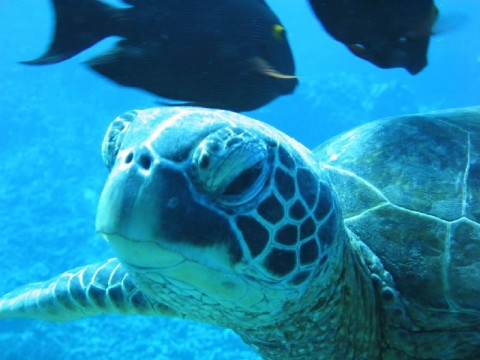 Petition: SAVE MALAYSIA'S SEA TURTLES