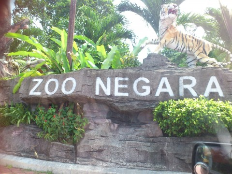 Volunteer with Zoo Negara!