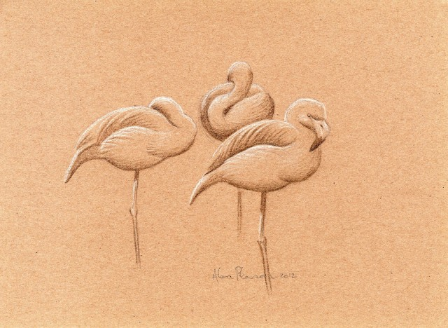 Flamingos by Alan Pearson 26 May 2012