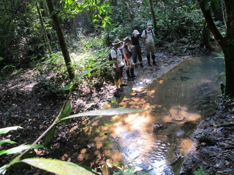 The Ulu Muda Field Research Center: increasing knowledge of Ulu Muda's natural history