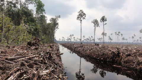 Climate Change and Environmental Degradation - Image source: http://wwf.panda.org/?209144/Indonesian-deforestation-moratorium-extended