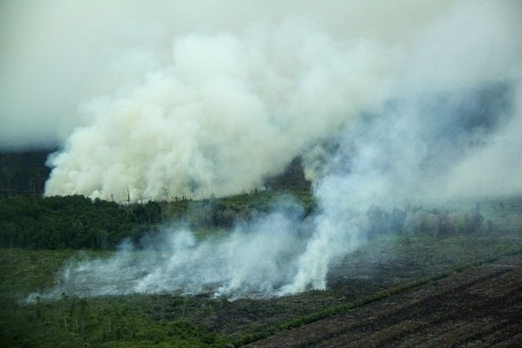 Climate Change and Environmental Degradation - Image source: http://earthfirstnews.wordpress.com/2012/06/30/palm-oil-industry-burning-indonesian-orangutans-into-extinction-to-build-plantations/
