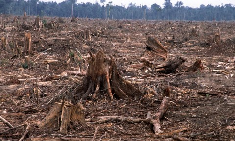 Deforestation - Image source: worldwildlife.org