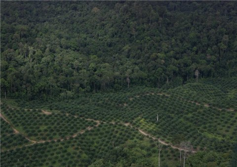 Deforestation - Image source: http://www.sciencedaily.com/releases/2011/02/110201084240.htm