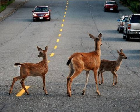Human-Wildlife conflict - Image source: http://wildliferesearch.org/conservation/human-wildlife-conflict/