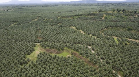 Ban on Oil Palm, Mining Expansion Offers Promise for Indonesian Forests and Smallholders