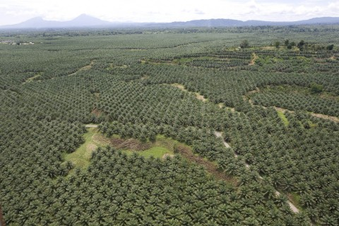 Oil palm plantations in Malaysia… is it worth it?