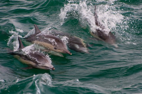 Talk on whales & dolphins @ Naturally Langkawi Green Week @Frangipani Resort & Spa