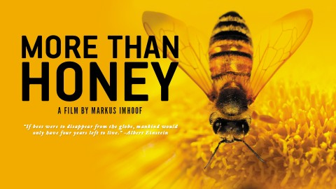 more-than-honey-banner
