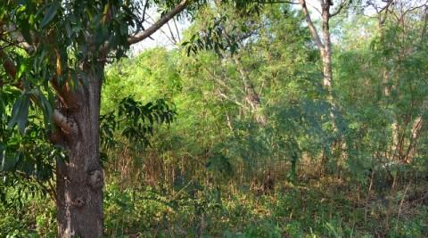 Responding to Climate Change: Metropolitan Subang Jaya Securing Urban Green Spaces Moving Forward