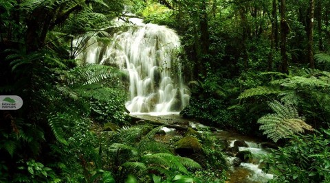 Bogor West Java Rainforest Adventure 5D4N