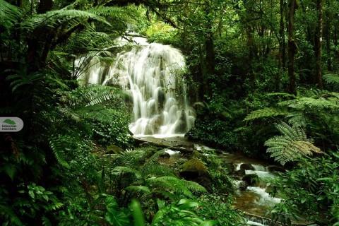 Bogor West Java Rainforest Adventure 5D4N