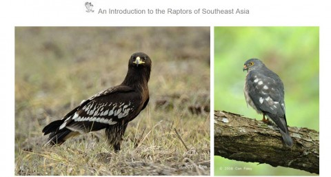 MNS Activity: Talk on Asian Raptors & Their Migration