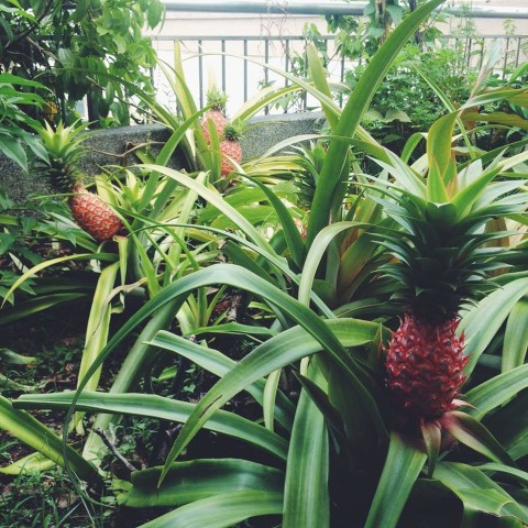 The Edible City: Urban Gardening and Food Futures of KL