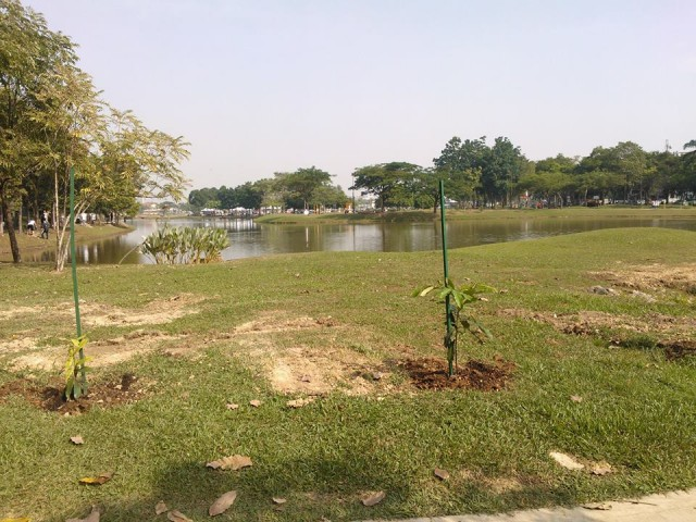 Planted! Noble tree, may you grow well and provide more shades and oxygen on Earth!