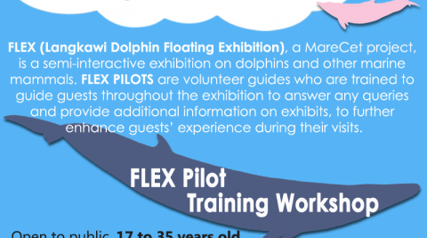 Fun workshop on guiding for whale & dolphin exhibition