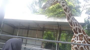 Zoo Negara : Let's Go Volunteering!