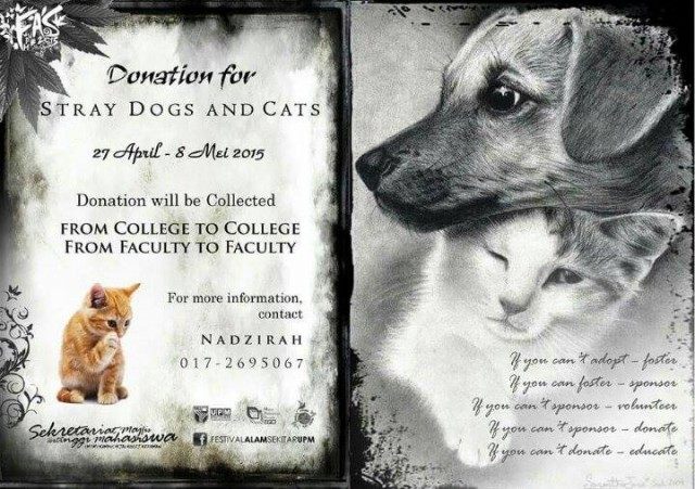 Donation for Stray Cats and Dogs