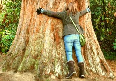 Will You Hug a Tree?