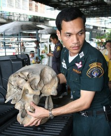 A Thai law enforcement officer carries a skull confiscated in Bangkok
