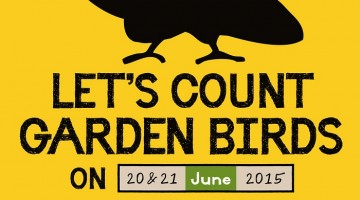 Let's count garden birds on 20th & 21st June