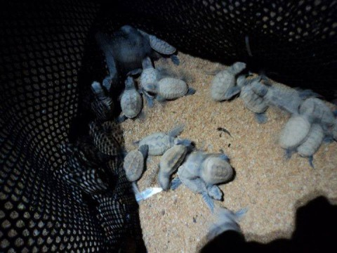 Registration for the MNS Green Living Turtle Volunteer Programme 2015