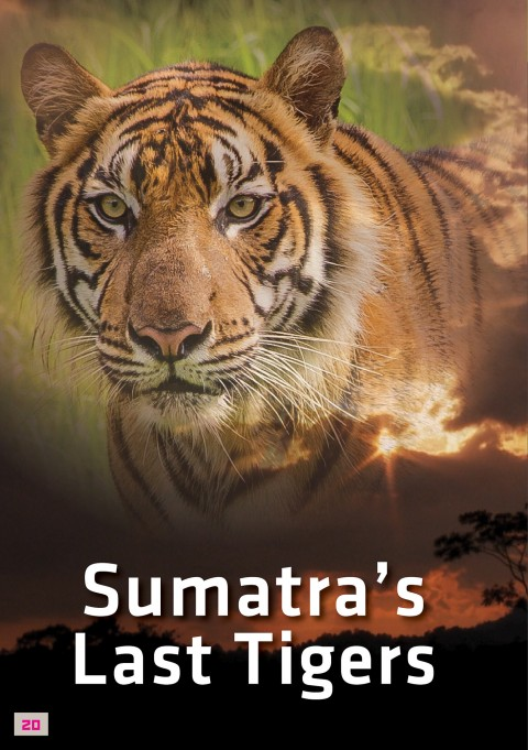 "National Screening of ""Sumatra's Last Tiger"", October 16th 2015, Black Box, Publika, at 7:45 pm"