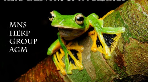 Herp Group AGM & Herp Talk: Frogs of Malaysia